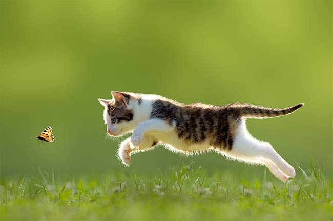 Kitten Care in Islip, AL