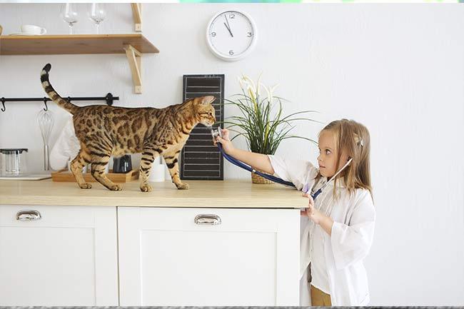 Feline Wellness Care in Islip, AL