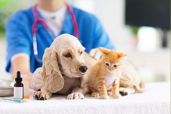 veterinarian Islip. Long Island NY