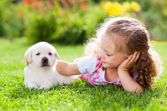 Puppy Health Care in Islip, AL