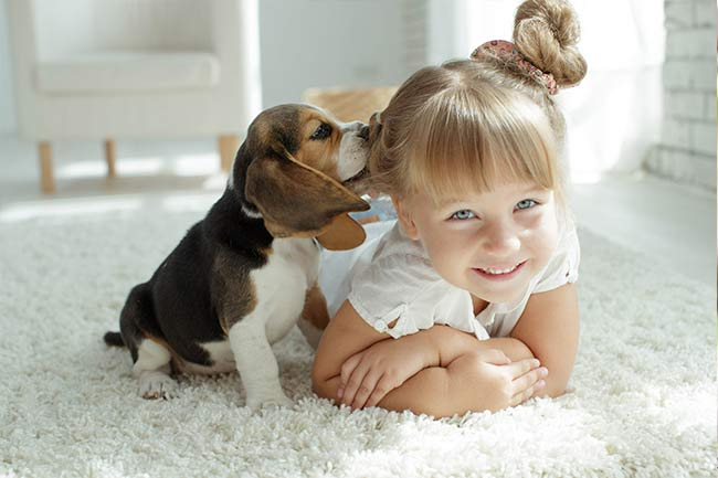 Canine Wellness Care in Islip, AL
