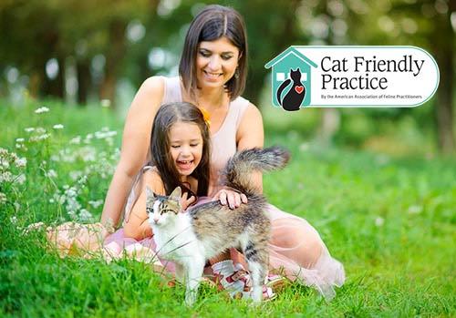 Cat Friendly Practice in Islip NY