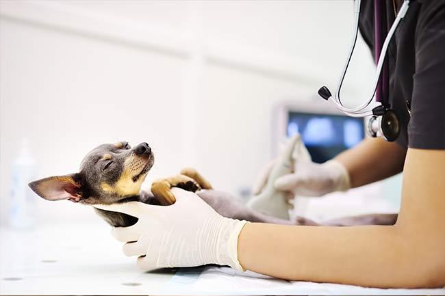 Diagnostic Veterinary Testing in Islip, AL