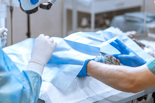 Dog Cat Surgery Vet in Islip, AL
